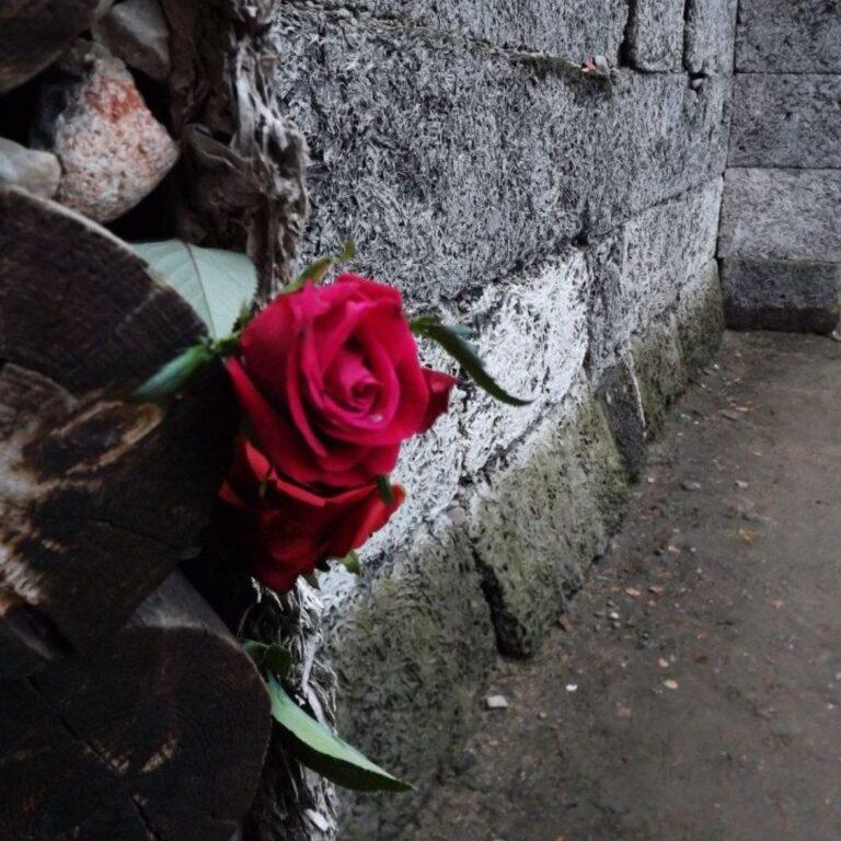 Read more about the article IL MIO VIAGGIO DELLA MEMORIA